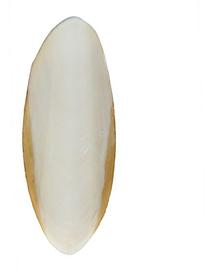 TRIXIE Szépiacsont teknősbékának 12 cm