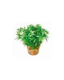 ZOLUX Kis növény 1 készletből