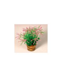 ZOLUX Kis növény 2 készletből