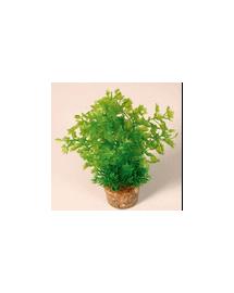 ZOLUX Közepes növény 2 készletből