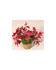 ZOLUX Közepes növény 3 készletből