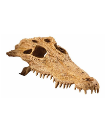 EXOTERRA Rejtekhely krokodil koponyája