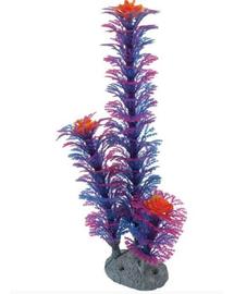 ZOLUX  Dísz növény, kék M 22 cm