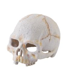 EXOTERRA Rejtekhely emberi koponya, kicsi