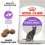 ROYAL CANIN STERILISED - ivartalanított felnőtt macska száraz táp 10 kg